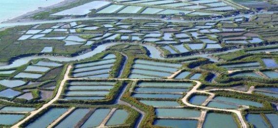 法國Claire 養殖生蠔舊鹽田池